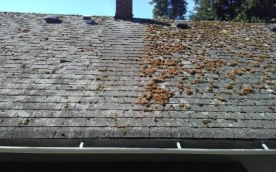 Clark County Summer Roof Maintenance